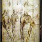1- Exposition Léonard de Vinci, Louvre, nov 2019 (1)